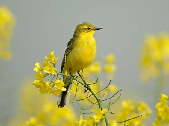 Birds that were once a common sight in Britain take flight, never to return