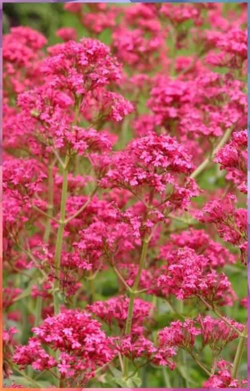 Pflanzen Fur Trockene Und Sonnige Standorte Pflanzen Fur Trockene Und Sonnige Standorte In 2020 Blumen Fur Garten Pflanzen Bepflanzung