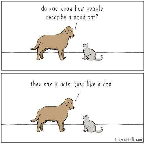 A Good Cat Dog Comics Cool Cats Funny Animals
