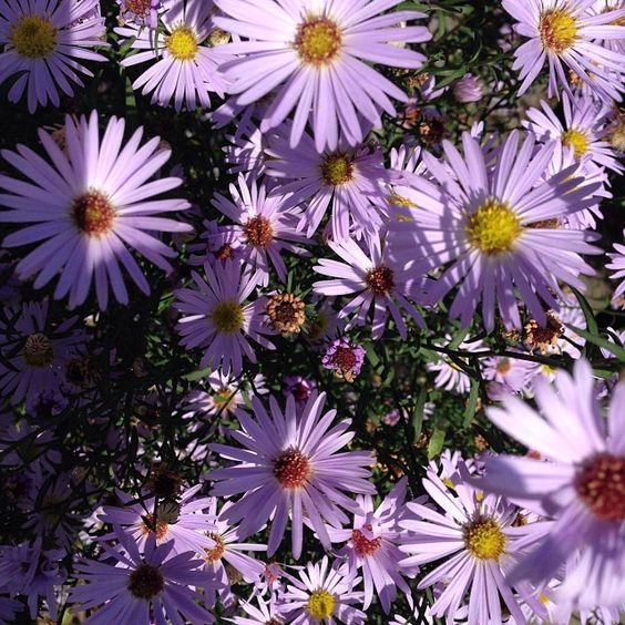 #autumn #flowers #londongardens
