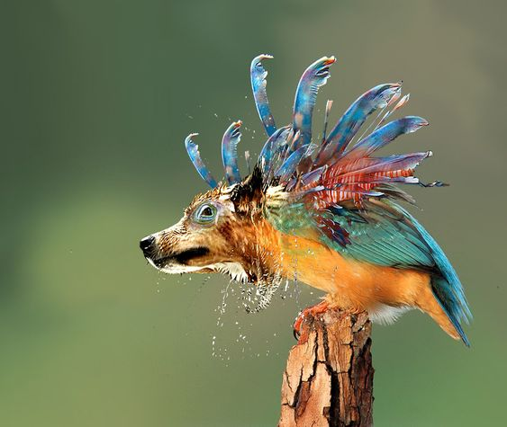 Funny dog bird n lizard fish funny images of for Water lizard fish