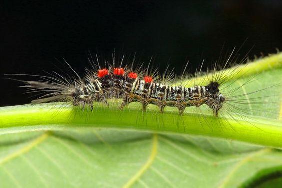 """""""Caterpillar fur"""" by Ridwan Safoetra"""