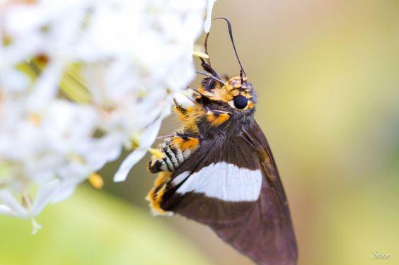 Butterfly  Macro photo by jacoraustanislas http://rarme.com/?F9gZi