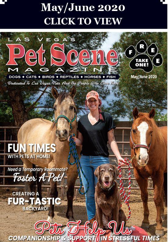 Las Vegas Pet Scene Magazine May June 2020 The Fosters Pets Dog Cat