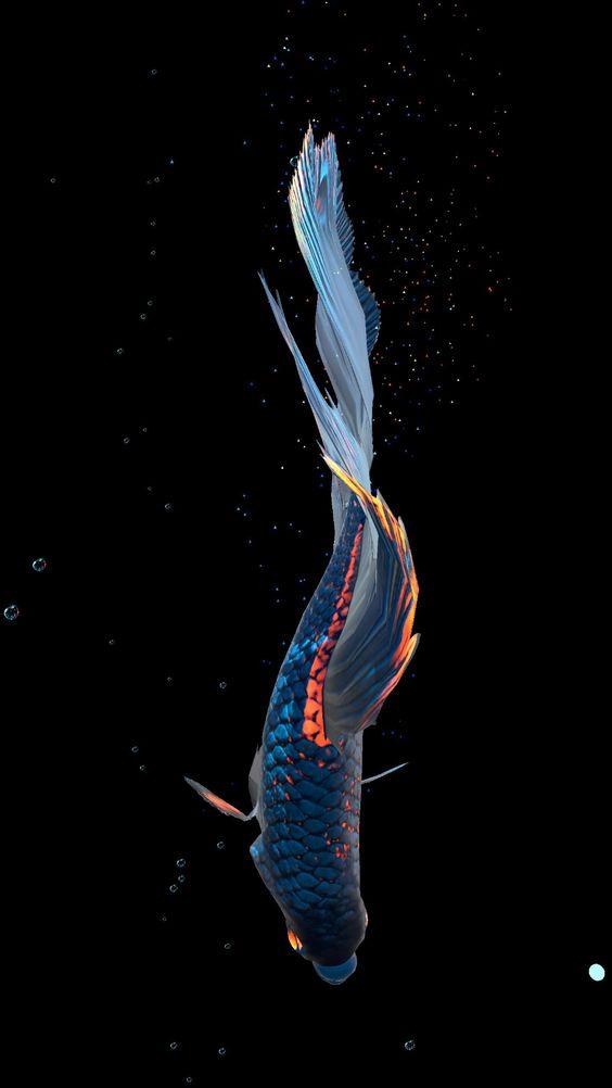 Live Wallpaper Betta Fish Betta Fish Wallpapers Wallpaper Cave Total Update Betta Fish Fish Wallpaper Betta Betta fish live wallpaper