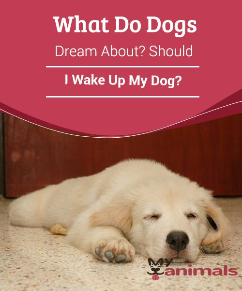 50+ Why do dogs shake when they wake up ideas