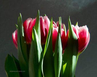 Tulipanes rojos por MaryAnnCarterPhotos en Etsy