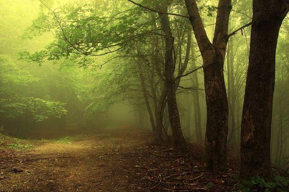 Polaris - fotos del mundo: Bosque mágico