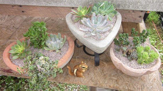 Succulents in papercrete pots!