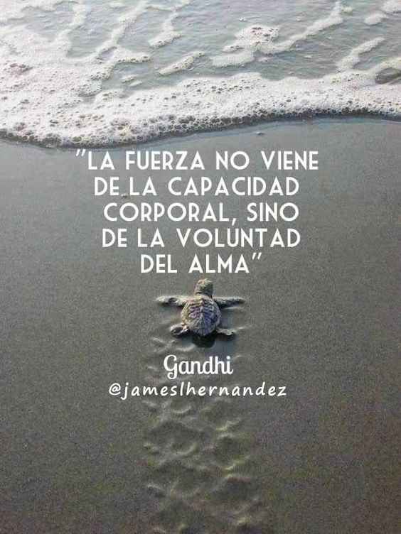 "James L. Hernández on Twitter: ""Ve por tus #sueños con mucha #fuerza, mucha #energia, no te pongas #limites...  #FelizMiercoles #frases #motivacion https://t.co/SVMQLyr0Pc"":"