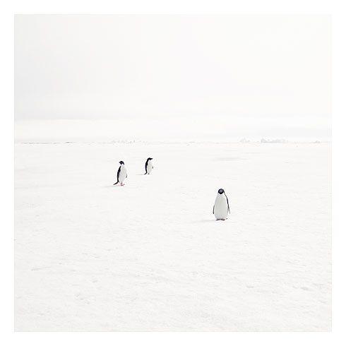3 pingouins
