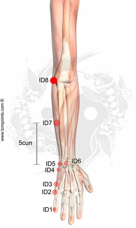 ID8--Inflamacion ganglios, tiroides, paperas, inflamación cuello, encías
