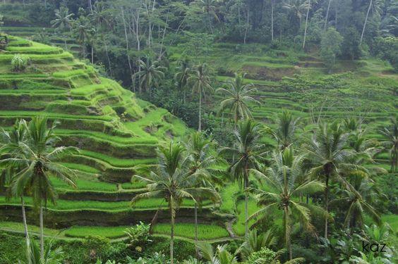Wisata Menarik Ubud Ubud Adalah Jantung Budaya Bali Daerah Ini