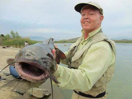 Cats bobs and lakes on pinterest for Lake perris fishing report