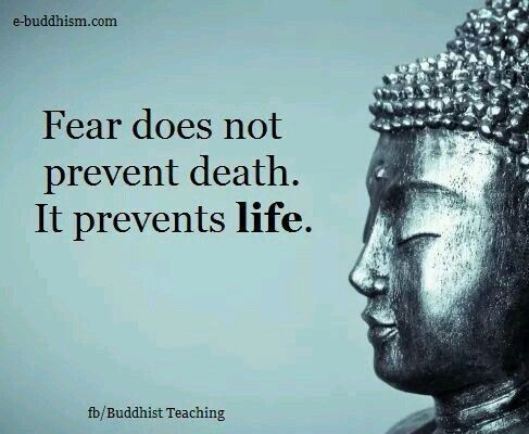 Pin By Dickson Billson On Camera Saves Buddhism Quote Fear Quotes Buddha Quote