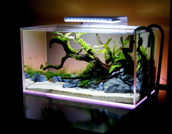 Led lights and to look on pinterest for Dirty fish tank