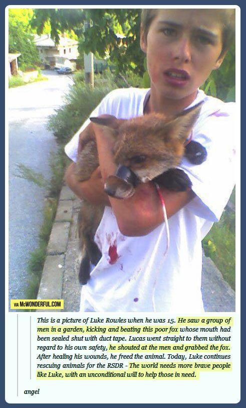 The kid who saved a fox! I can't believe there are people out there that can be so cruel to something so innocent: