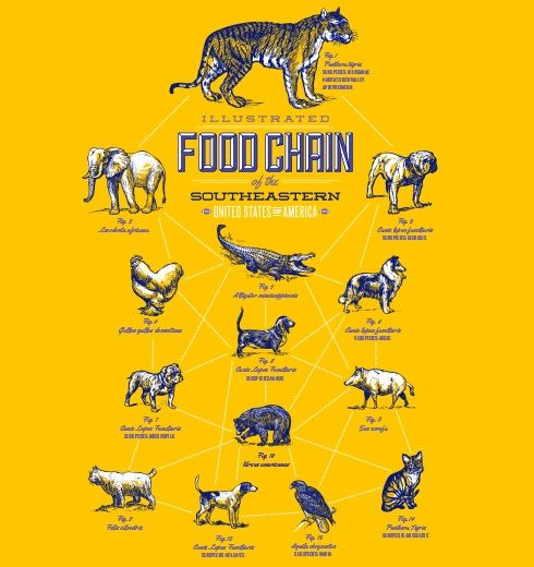 food chain | Biodivers...