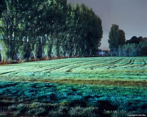 Tracks in Field - Night Photograph by John Vias Trees - field note