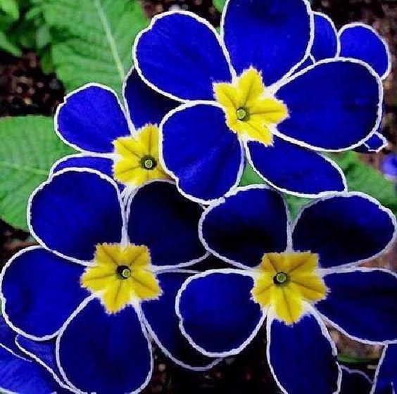 Bloemen in blauw