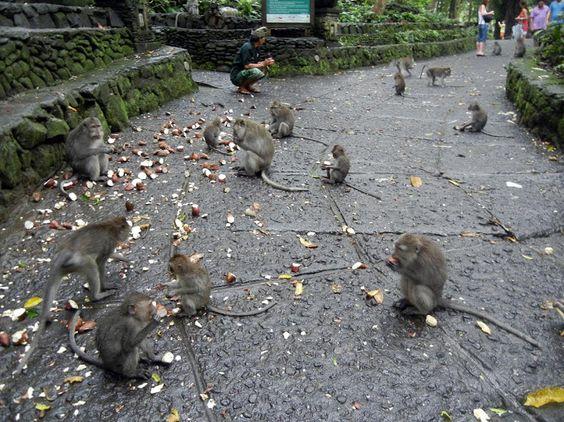 Лес обезьян: