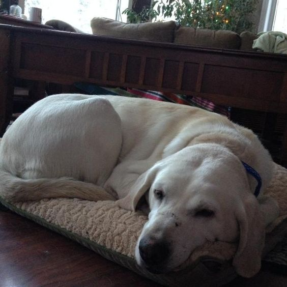 Oggie is being fostered with New Hope Dog Rescue (Saskatoon).  She is a very graceful and lovely lady, who is looking for peace, hope, love and safety. She was abandoned to fend for herself. Eight year...