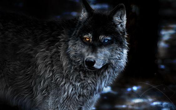 Download Wallpapers Wolf Blur Fantasy Art Night Predators Heterochromia Besthqwallpapers Com Wolf Wallpaper Anime Wolf Fantasy Wolf