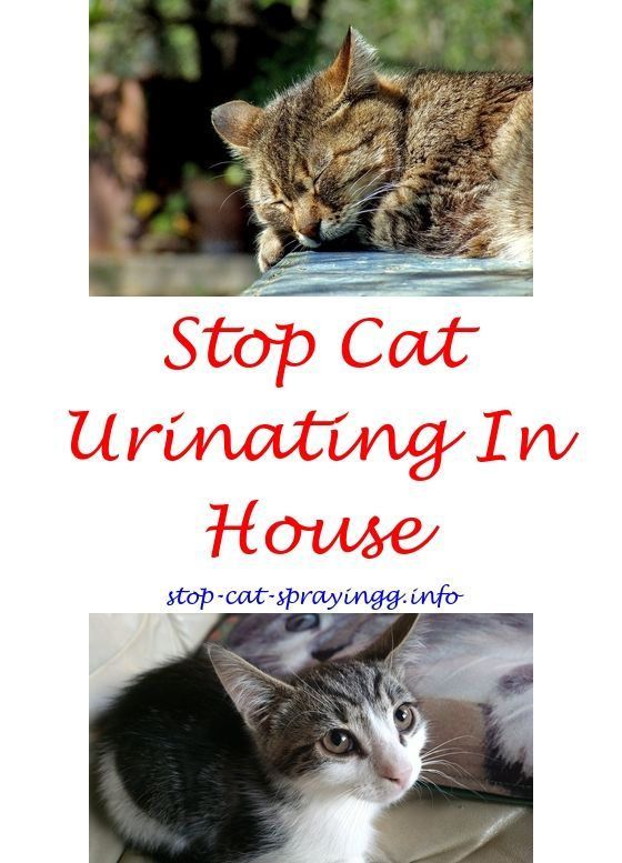 From Nail Biting To That Crazy Chatter We Re Pulling Back The Curtain On Strange Things Cats Do Cat Pee Smell Male Cat Spraying Cat Peeing In House