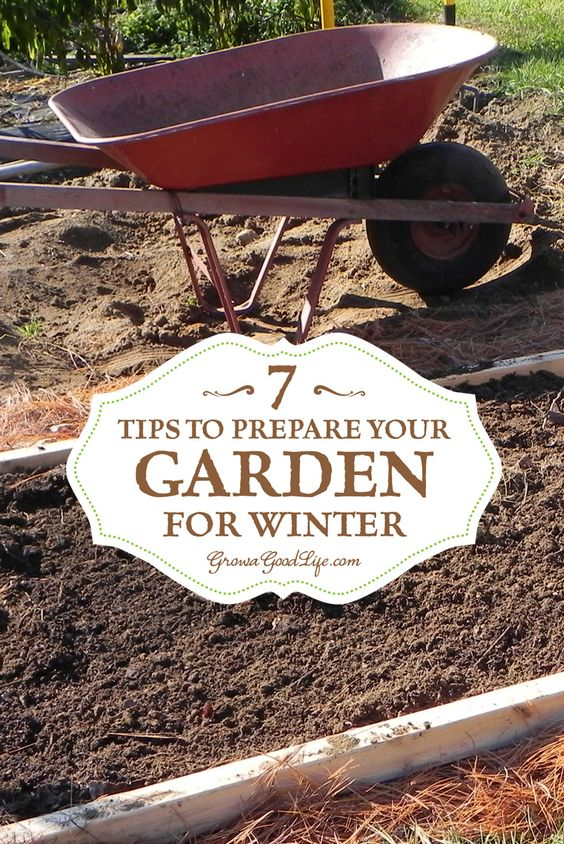 7 Tips To Prepare Your Vegetable Garden For Winter Gardens Winter And Vegetables