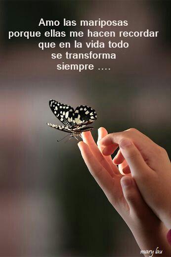 Como Mariposas 511da6e42e454ee34f66a75bb3f61df6