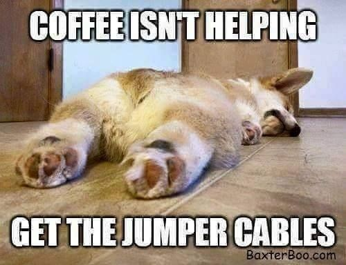 27 Funny Memes To Get You Through Monday Funny Good Morning Memes Funny Animal Memes Animal Memes