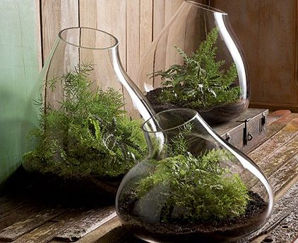 Dining room center piece ideas: We could DIY this. Roost Recycled Glass Bubble Terrariums | NECTAR IMPORTS: Home of fair trade and unique gifts, teas, architectural details, reclaimed and custom furnishing from around the world all in High Falls, NY