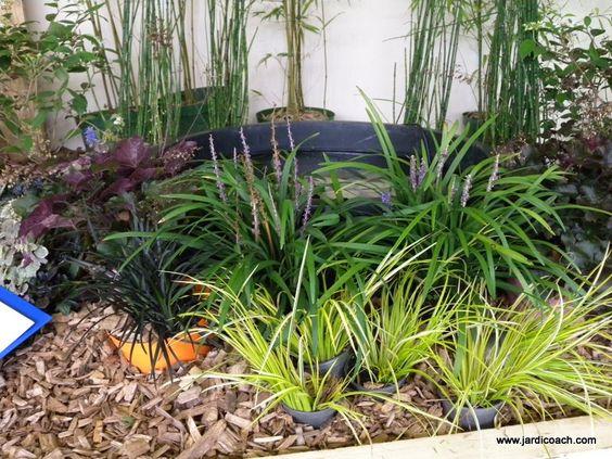 Un jardin potager à l'ombre