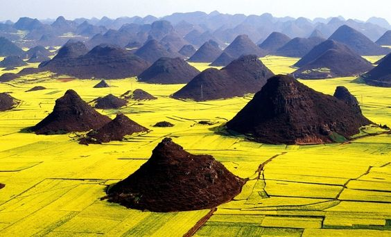 Canola flower fields, Luoping, China. Luoping is a small county in eastern Yunnan, China, located about 228 kilometers north east of Kunming close to the border of Yunnan with Guizhou and Guangxi provinces. Follow AmiPlanet on pinterest.com/AmiPlanet/