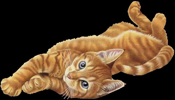 cats :: BIG_kitty.gif picture by 75renegade - Photobucket