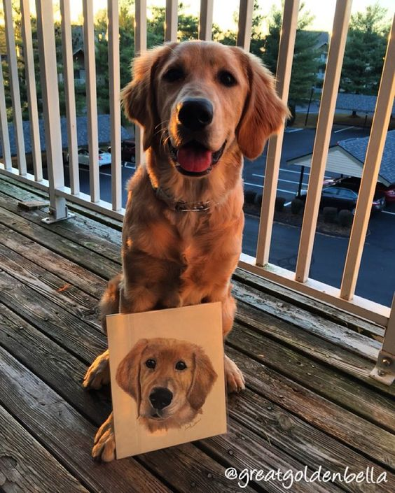 The talented and gifted artist @pawsnpencils drew me! Look at how much it resembles me. Mom and dad are obsessed with it and can't wait to get it hung! Thanks again you did amazing!! -------------------------------------------- #retriever #retrieversgram #retrieversofig #retrieversworld #retrieversofinstagram #goldenretrieversofinstagram #goldenpup #goldensofig #gloriousgoldens #goldens_ofinstagram #ilovegoldens #goldensofinstagram #goldenpupsquad @beau_thegolden @lifeofharleythedog…