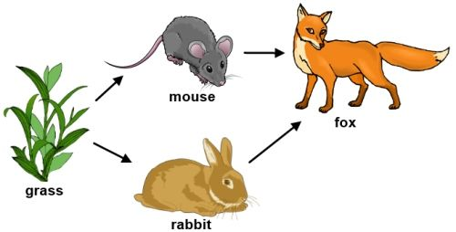 Food Web of a Forest | Food Chains/Webs | Pinterest | D, Forests and ...