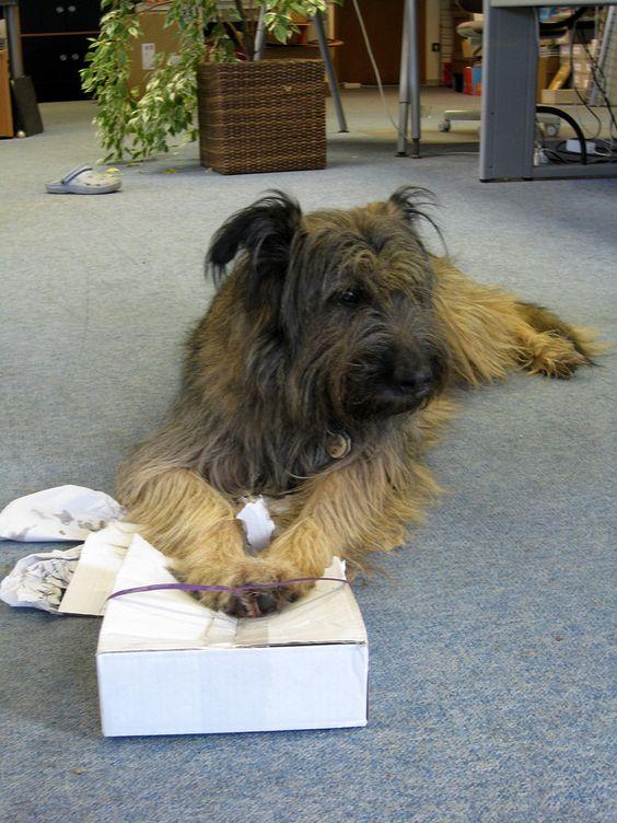 Im Verlag. Lotta packt ihr Päckchen aus. #Verlag #Hund #Buch #Book #dog