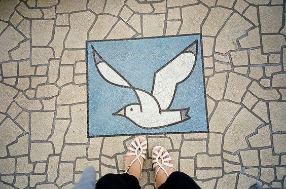 カモメ | Flickr - Photo Sharing!