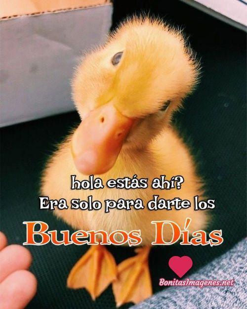 Pin De Mayra Garcia En Post Frases Graciosas De Buenos Dias