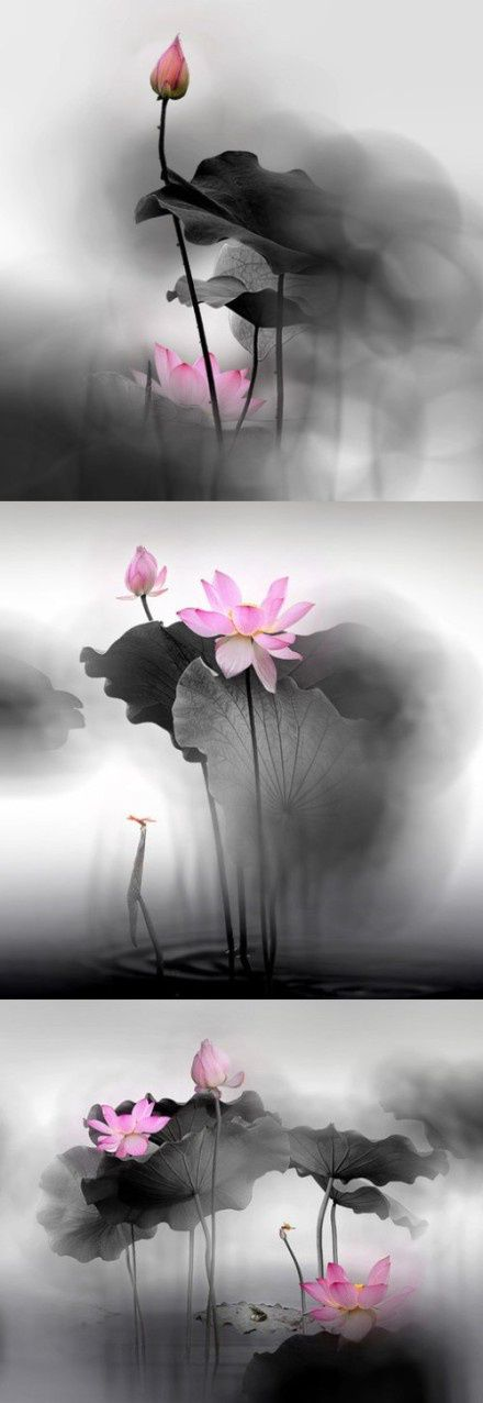 Lotus flower - Love The Combo B with Color