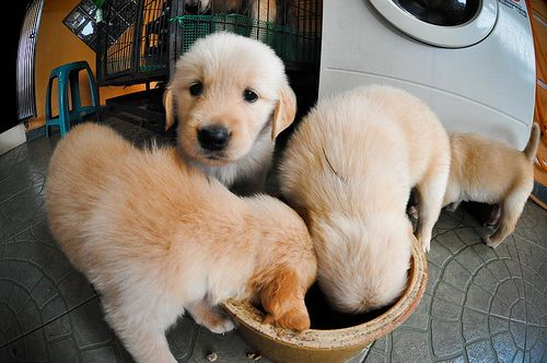 Cute puppy and dog - http://www.1pic4u.com/blog/2015/01/07/suesse-hundebabys-269/