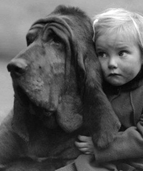 Bloodhound, Champion Leo of Reynalton, is cuddled by a rather worried looking little girl - 1935 - Photo by William Vanderson - http://www.gettyimages.no/detail/photo/worried-friend-high-res-stock-photography/JG2132-001