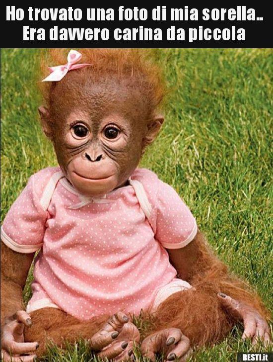 Ho trovato una foto di mia sorella.. Era davvero carina da.. | Cucciolo di  orangutan, Divertente, Immagini divertenti