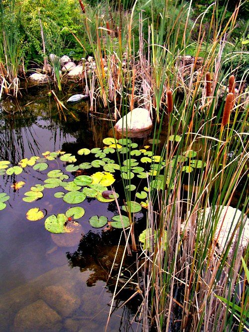 Pond pumps and pond filters are not required--find out how to build ponds with less equipment, less maintenance and more natural.: