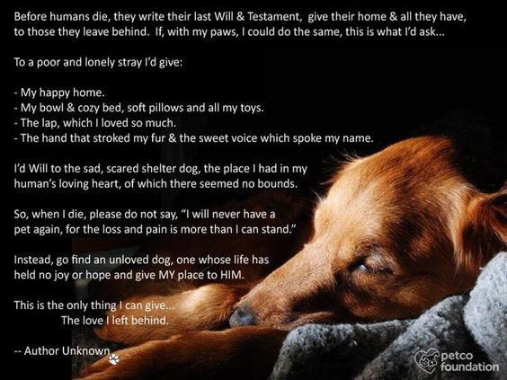 ♥ Made me cry. Love my adopted puppy