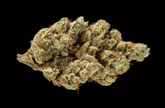 Kosher Kush Strain Review And Information https://www.greenrushdaily.com/2016/11/23/kosher-kush?utm_source=rss&utm_medium=Friendly+Connect&utm_campaign=RSS @greenrushdaily #Cannabis