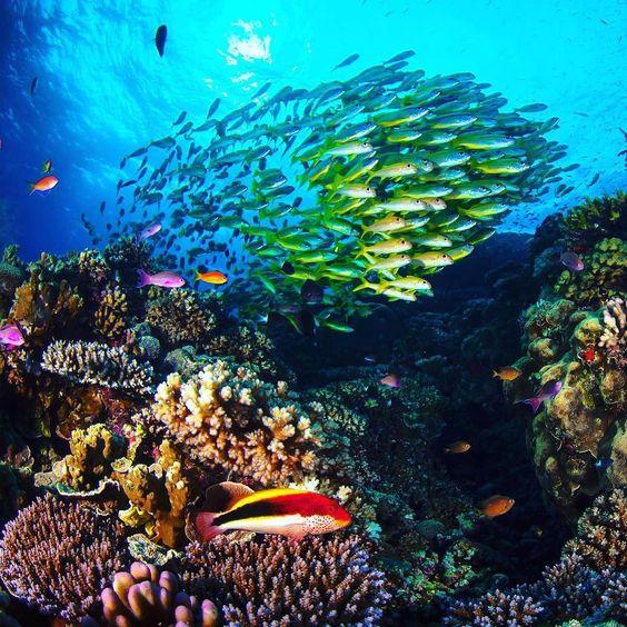 Traumhaft schön: So sieht das Leben am Great Barrier Reef in Queensland aus. Die Existenz des größten Korallenriffs der Welt ist durch den Klimawandel bedroht.  #Greatbarrierreef #Korallen #Korallenriff #Korallenmeer #Australien #Fisch #Queensland #Corals #Atoll #Australia #Coralsea #Fish #DieWelt  Foto: Matt Curnock / AFP by welt http://ift.tt/1UokkV2