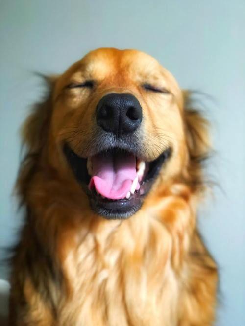 Happy Dog   Happy Dog