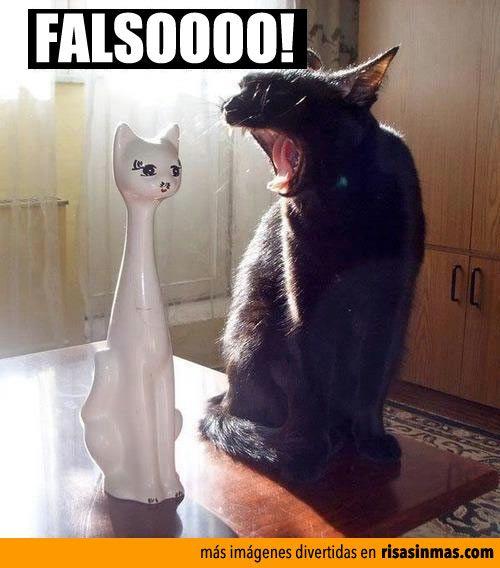 Pelea de gatos.